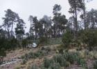 DinoEvo in Mexico
