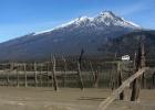 DinoEvo in Chile